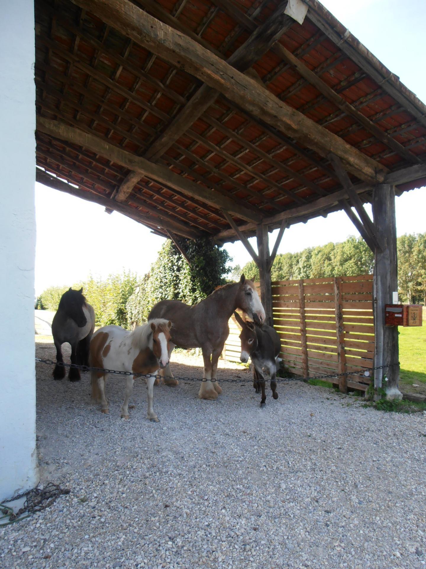 Entree avec chevaux